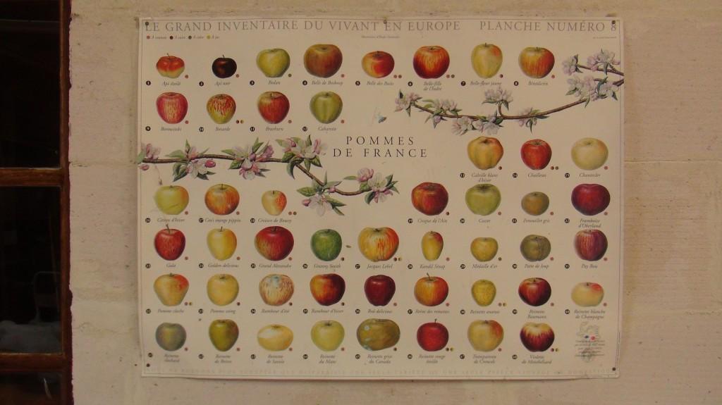 French apple varieties