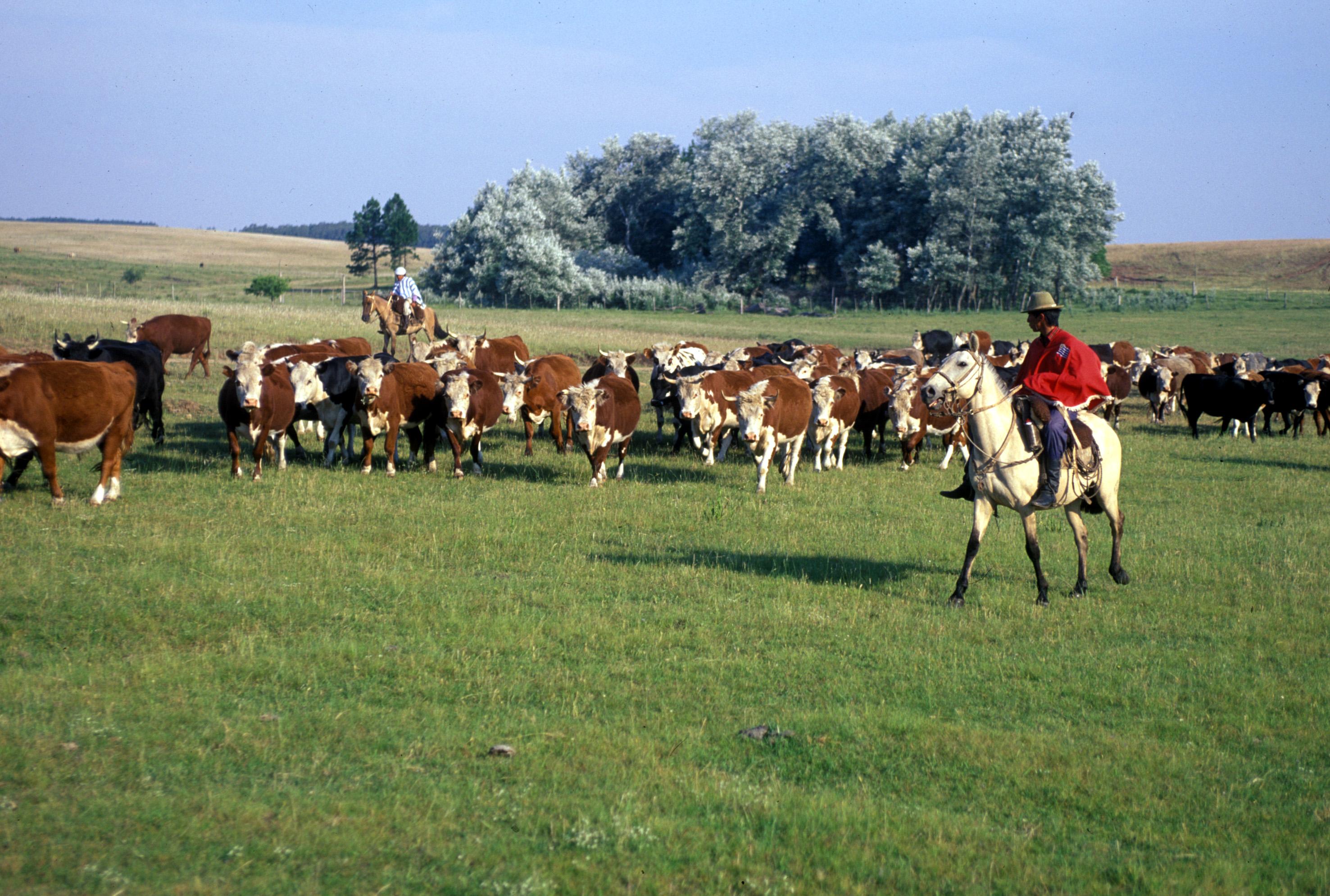 Gauchos -- Argentinian/Uruguayan cowboys